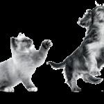 Royal canin Pet Vital kaart